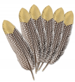 Federn 6 Stück braun