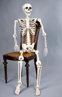 Halloween dreidimensionales Deko Skelett