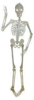 Leucht-Skelett, ca. 150 cm